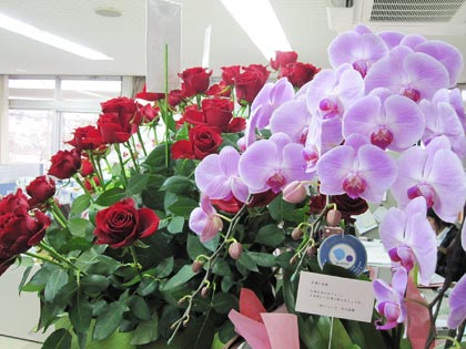 薄紫の蘭の花