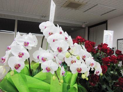 白い蘭の花