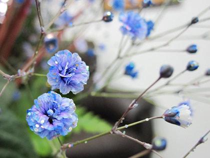 青いかすみ草